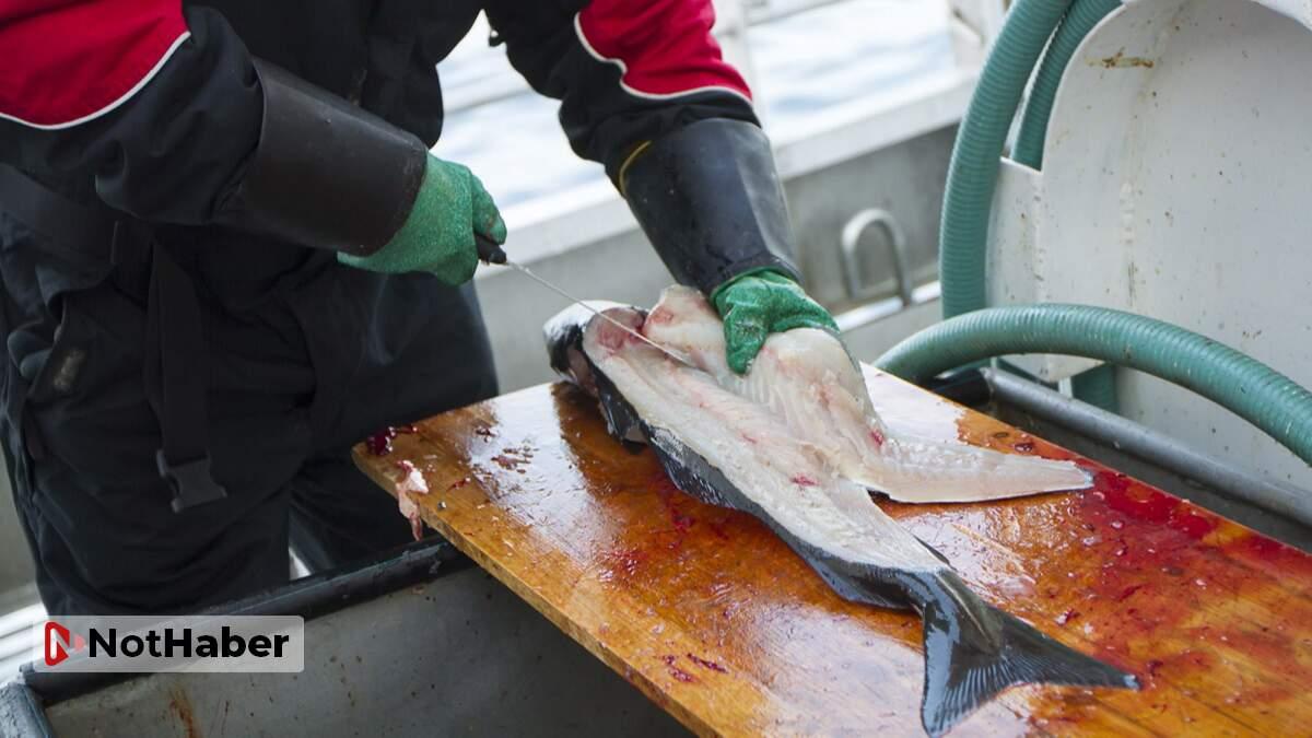 Rüyada Balık Temizleyen Birini Görmek Ne Anlama Gelir?