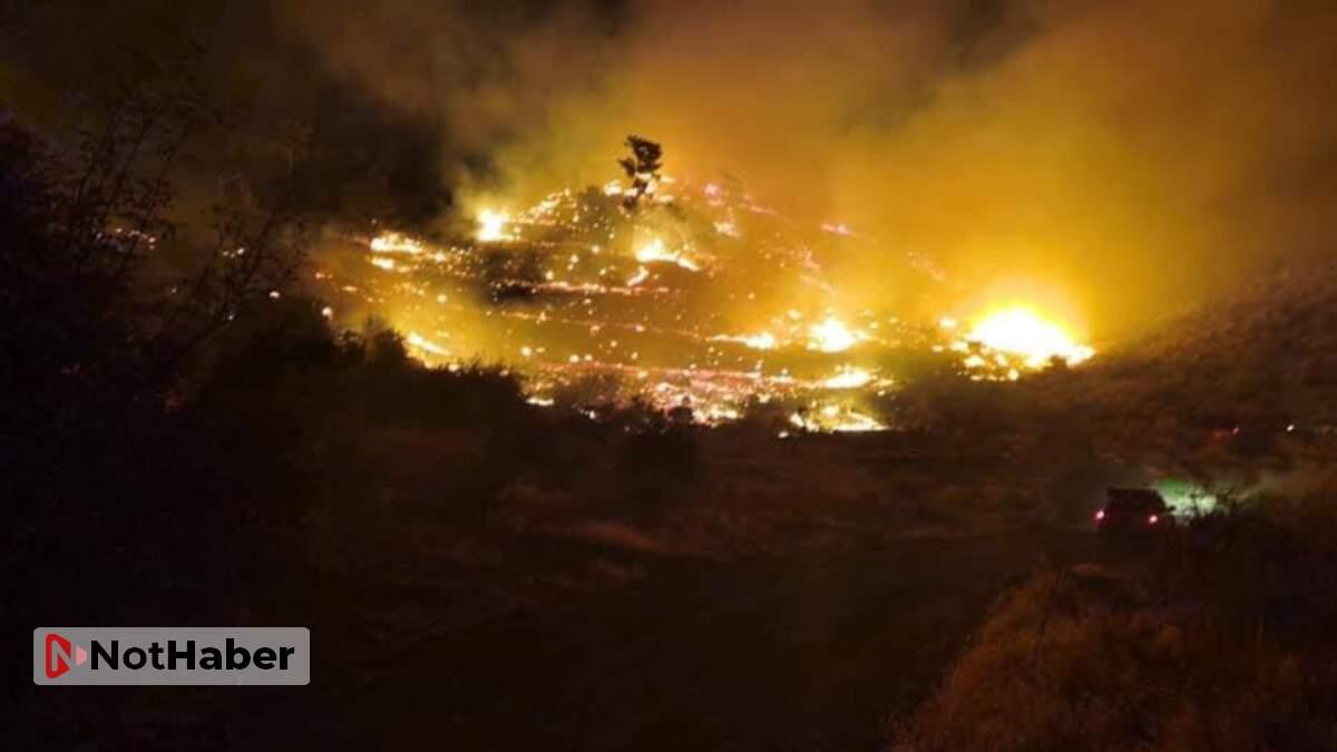 Muğla'da ormanlık alanda yangın!